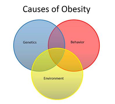 internal medicine obesity